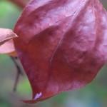 Herbst: Warum ich dich liebe