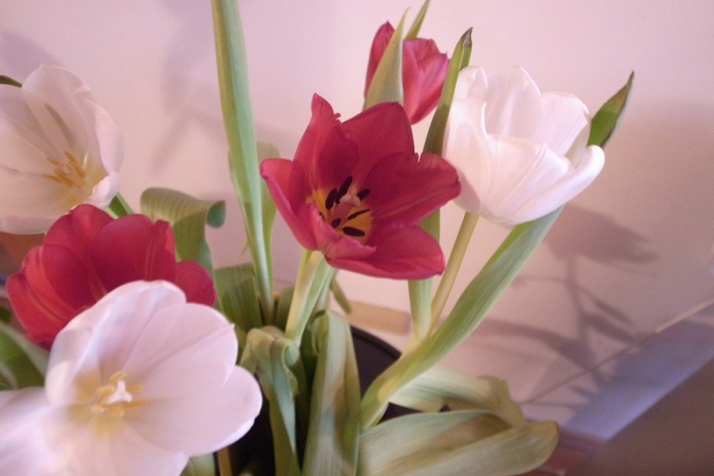 Blumen sorgen für ein duftendes Zuhause und ein gutes Raumklima