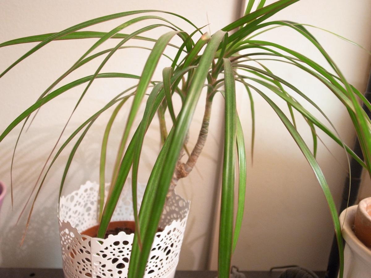 Zimmerpflanze sorgt für gutes Luftklima