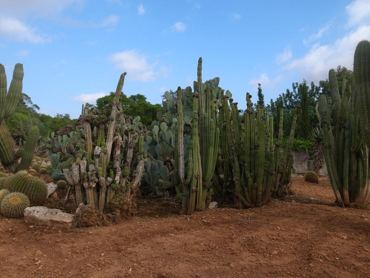 Botanicactus, Ses Salines, Mallorca